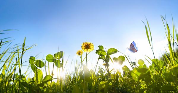 Climat: l'Inrae montre la capacité des plantes des prairies à s'adapter