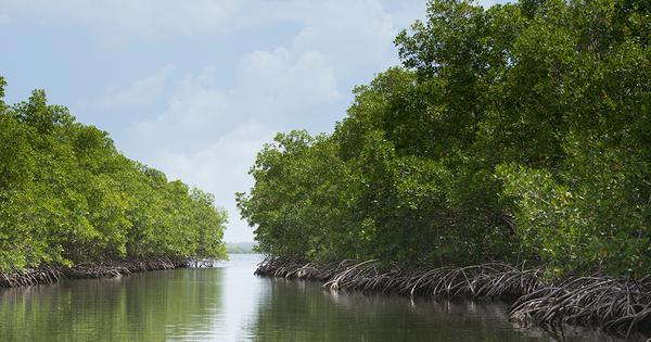 L'OFB soutient les projets de valorisation économique de la biodiversité