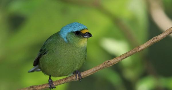 La Guadeloupe lance son Agence régionale de la biodiversité