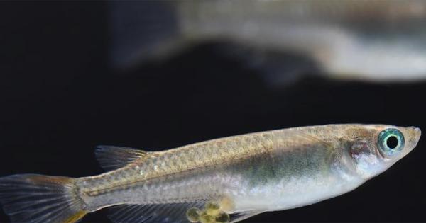 Pêche et sélection naturelle, synergie perdante pour la biodiversité