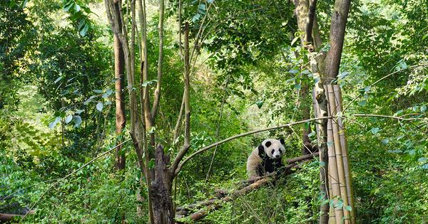 Biodiversité: la COP 15 repoussée à octobre 2021