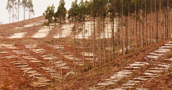 Biomasse forestière: une consultation européenne sur les nouveaux critères de durabilité
