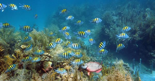 Biodiversité des outre-mer: l'OFB lance trois appels à projets
