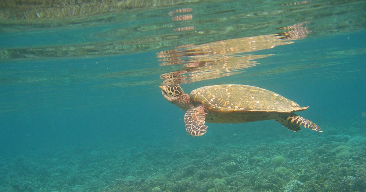 Le réchauffement climatique modifie la distribution de la vie marine