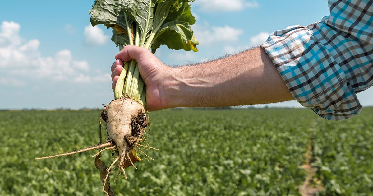 Pesticides néonicotinoïdes: les ONG saisissent de nouveau le Conseil d'État