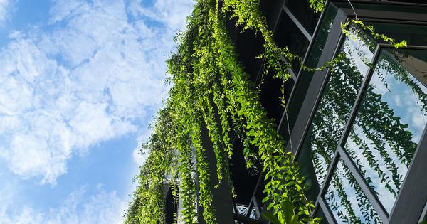 Végétalisation des toitures: la Commission européenne enregistre une initiative citoyenne