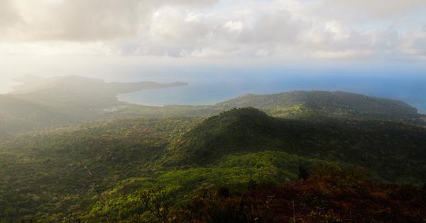 La réserve naturelle nationale des forêts de Mayotte est créée