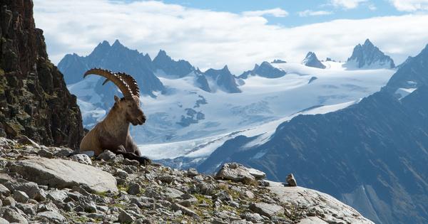 Climat: dans les Alpes, les espèces remontent vers les sommets de manière hétérogène