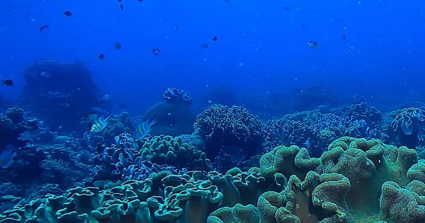 L'Europe va-t-elle renforcer l'interdiction de pêche en eaux profondes?