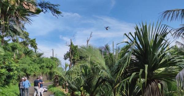 Lutte contre les nuisibles: lâcher de moustiques stériles sur l'île de La Réunion