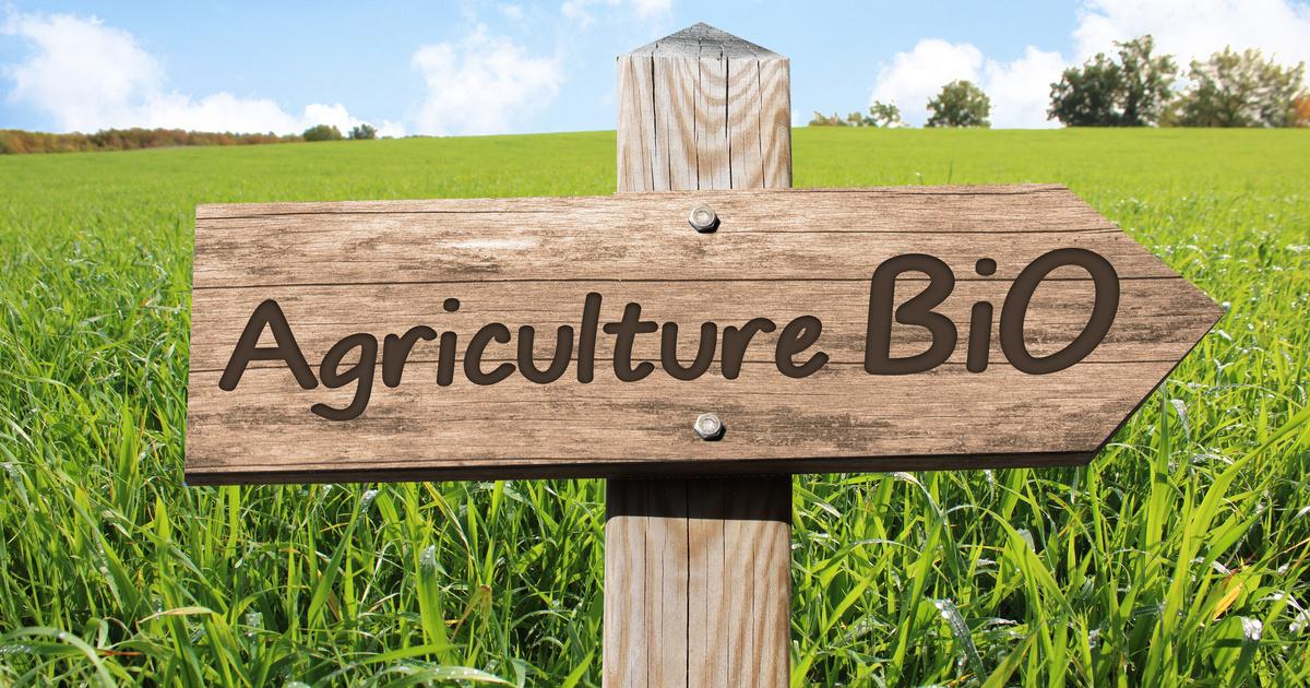 Développer les sources d'azote est indispensable au déploiement de l'agriculture biologique