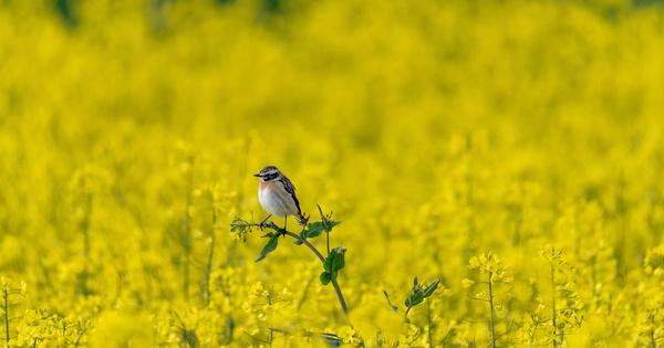 Néonicotinoïdes: la LPO réclame la réparation du préjudice écologique aux agrochimistes