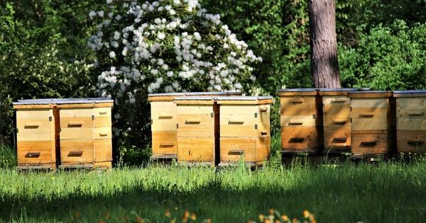 L'Efsa propose une nouvelle méthode d'évaluation des risques environnementaux pour les abeilles
