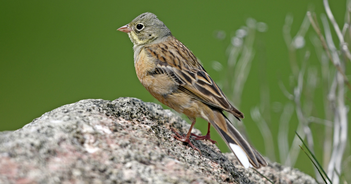 Oiseaux: 43 espèces en régression selon un bilan de 30 ans d'observation