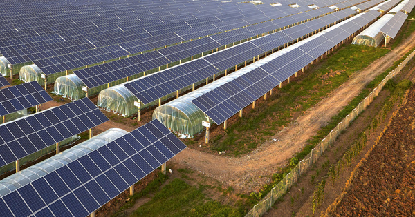 Photovoltaïque et agriculture: création de la fédération professionnelle France Agrivoltaïsme