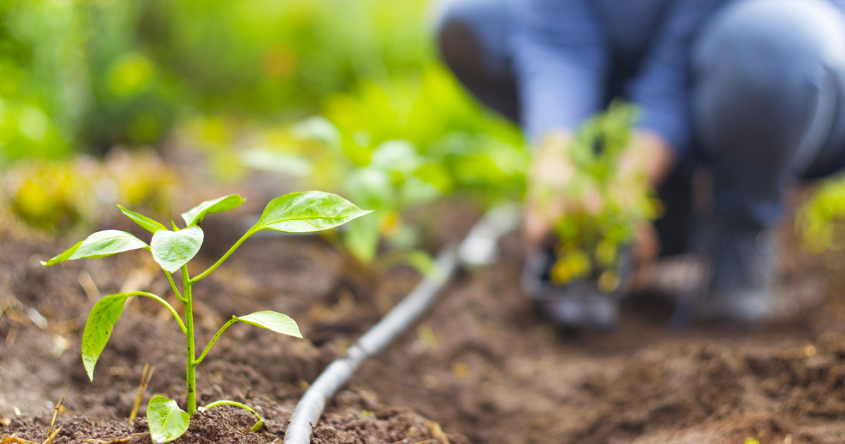Les chercheurs du CNRS imaginent un plan pour nourrir l'Europe grâce à l'agriculture biologique