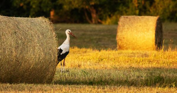 Les externalités positives de l'agriculture reconnues par le code rural