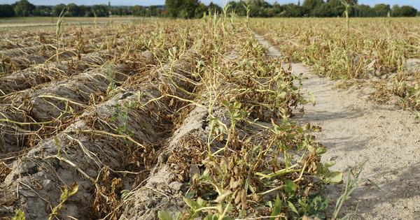 Le ministère de l'Agriculture présente son plan d'adaptation au changement climatique