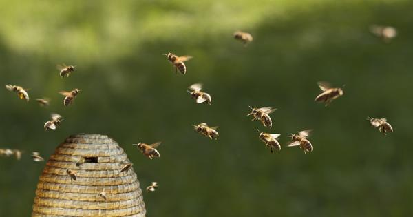 Abeilles et pesticides: les États membres fixent un taux de perte «acceptable» des colonies