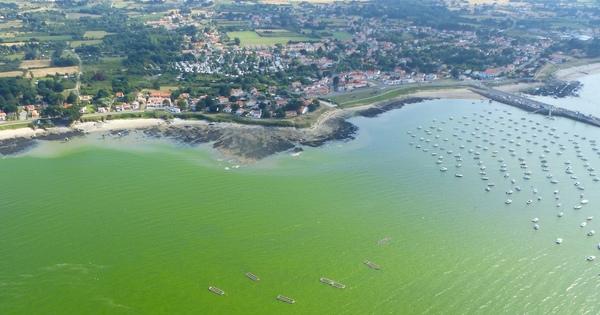 Eaux colorées sur le littoral: aidez les chercheurs dans leur enquête