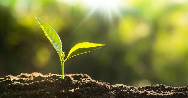 Depuis 1936, la diversification des cultures améliore la production et la biodiversité