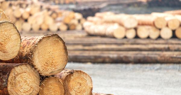L'État débloque 100 millions d'euros supplémentaires pour aider la filière du bois