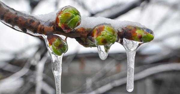 Varenne de l'eau: la réforme du dispositif d'assurance récolte sera présentée en septembre