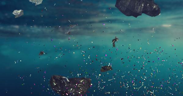 Les microplastiques perturberaient la croissance et le taux de reproduction des poissons