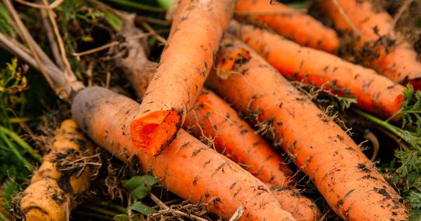 Un tribunal condamne des agriculteurs pour l'utilisation du pesticide dichloropropène interdit en France