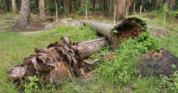 Les changements climatiques pourraient perturber les cycles du carbone forestier