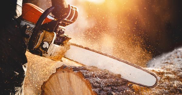 Jardins d'Aubervilliers: le permis de construire suspendu pour non-compensation des arbres abattus