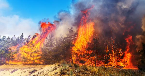 Les incendies de forêts estivaux ont généré des émissions de carbone records