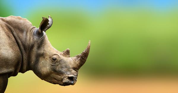 Trafic d'espèces sauvages: la révision du plan d'action européen en consultation