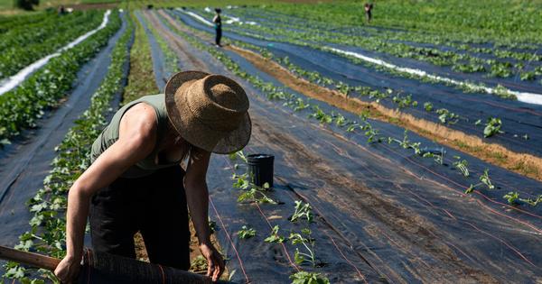 Les eurodéputés adoptent la Stratégie de «la ferme à la table»