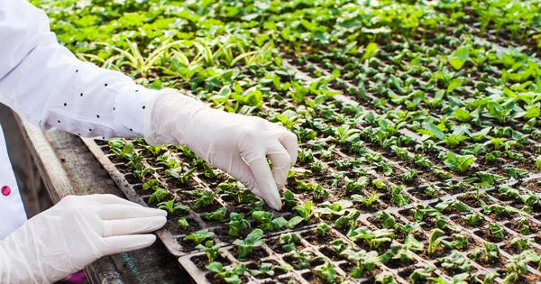 Évaluation des OGM: un projet de décret en consultation