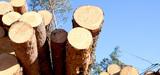 Le bois illégal interdit dans l'Union européenne