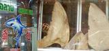 Espèces en danger : les requins protégés par la Cites
