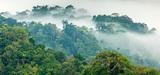 Projet minier Montagne d'Or en Guyane : vers l'organisation d'un débat public ?
