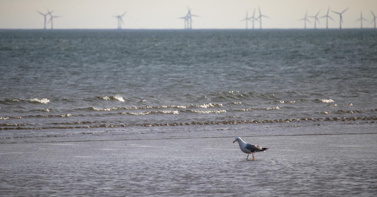 Éolien en mer: le rapport complexe entre énergies renouvelables, biodiversité et sites protégés