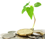 Quels financements pour le green business ?