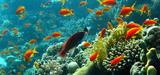 Les écosystèmes : une complexité encore à appréhender