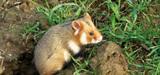 Loi Biodiversité : création de zones prioritaires pour protéger les espèces sauvages