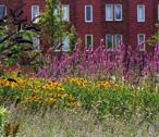 Biodiversité : les outils de protection en question