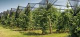Séquestration carbone des sols : une quarantaine d'Etats soutiennent l'initiative 4 pour 1000