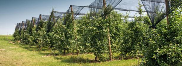 Séquestration carbone des sols: une quarantaine d'Etats soutiennent l'initiative 4 pour 1000