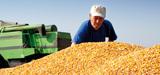 Quel modèle agricole derrière le plan méthanisation ?
