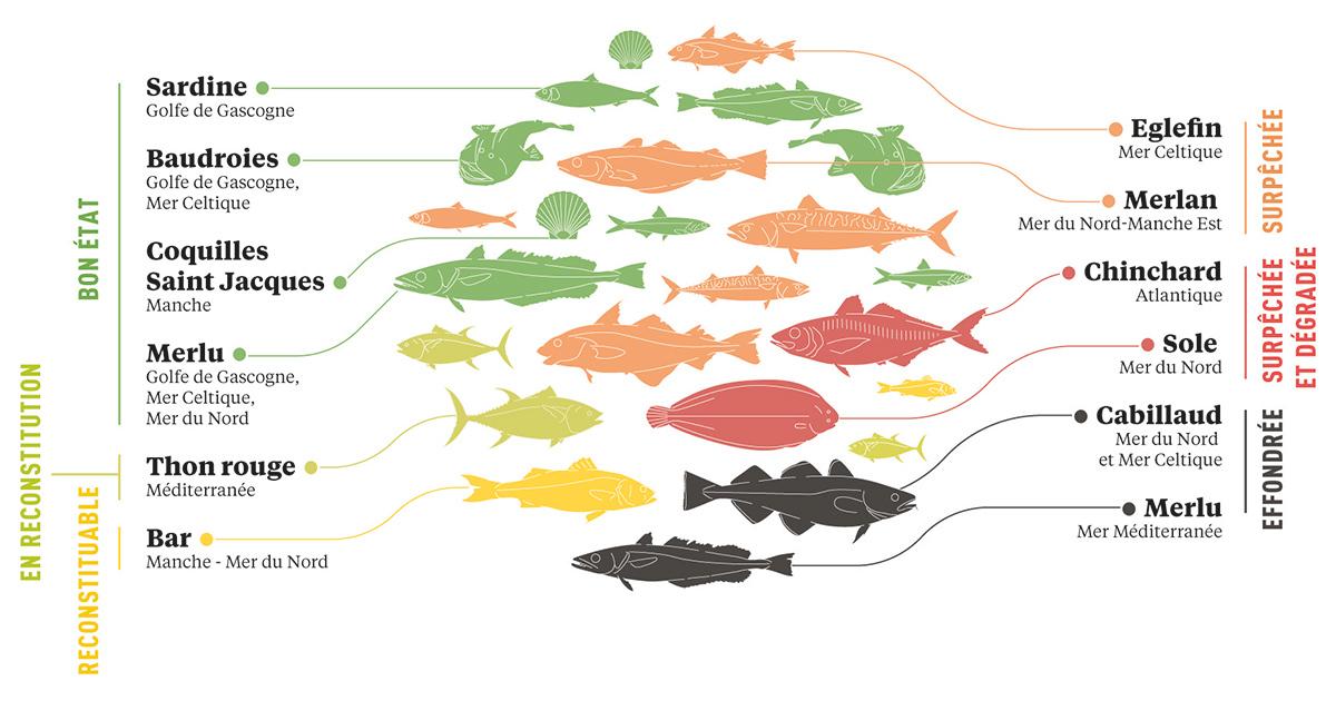 La surpêche touche encore 21% des populations de poissons sur les côtes françaises