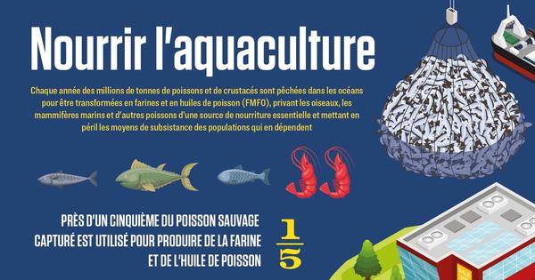 L'approvisionnement de l'aquaculture intensive par des poissons sauvages fait des dégâts