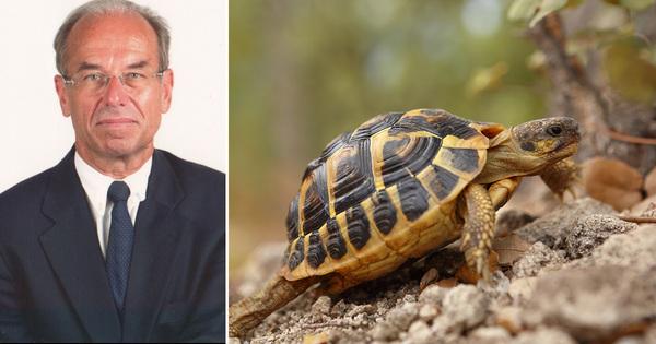 «La survie de la tortue d'Hermann sera menacée en cas de multiplication des incendies »