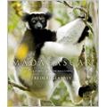 Madagascar - La forêt de nos ancêtres